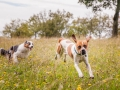Hundemaedchen_Maggy_Gaia_Langhaarcollie_Border_Collie_Mischling_Wanderung_Hohesrodskopf_Hundefreunde_Forum_Vogelsberg_Spaziergang (32)