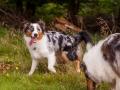 Hundemaedchen_Maggy_Gaia_Langhaarcollie_Border_Collie_Mischling_Wanderung_Hohesrodskopf_Hundefreunde_Forum_Vogelsberg_Spaziergang (56)