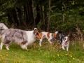 Hundemaedchen_Maggy_Gaia_Langhaarcollie_Border_Collie_Mischling_Wanderung_Hohesrodskopf_Hundefreunde_Forum_Vogelsberg_Spaziergang (66)