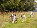 Hundemaedchen_Maggy_Gaia_Langhaarcollie_Border_Collie_Mischling_Wanderung_Hohesrodskopf_Hundefreunde_Forum_Vogelsberg_Spaziergang (80)