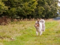 Hundemaedchen_Maggy_Gaia_Langhaarcollie_Border_Collie_Mischling_Wanderung_Hohesrodskopf_Hundefreunde_Forum_Vogelsberg_Spaziergang (83)