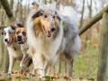 Hundemaedchen_Maggy_Gaia_Hundefreunde_Wanderung_Forum_Theo_Brooke_Smilla_Kito_Ulrichstein_Wandern_Spaziergang (108)
