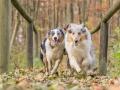 Hundemaedchen_Maggy_Gaia_Hundefreunde_Wanderung_Forum_Theo_Brooke_Smilla_Kito_Ulrichstein_Wandern_Spaziergang (156)