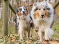 Hundemaedchen_Maggy_Gaia_Hundefreunde_Wanderung_Forum_Theo_Brooke_Smilla_Kito_Ulrichstein_Wandern_Spaziergang (158)