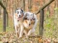 Hundemaedchen_Maggy_Gaia_Hundefreunde_Wanderung_Forum_Theo_Brooke_Smilla_Kito_Ulrichstein_Wandern_Spaziergang (167)