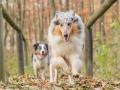 Hundemaedchen_Maggy_Gaia_Hundefreunde_Wanderung_Forum_Theo_Brooke_Smilla_Kito_Ulrichstein_Wandern_Spaziergang (174)