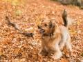 Hundemaedchen_Maggy_Gaia_Hundefreunde_Wanderung_Forum_Theo_Brooke_Smilla_Kito_Ulrichstein_Wandern_Spaziergang (181)