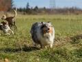 Hundemaedchen_Maggy_Gaia_Hundefreunde_Wanderung_Forum_Theo_Brooke_Smilla_Kito_Ulrichstein_Wandern_Spaziergang (22)