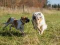 Hundemaedchen_Maggy_Gaia_Hundefreunde_Wanderung_Forum_Theo_Brooke_Smilla_Kito_Ulrichstein_Wandern_Spaziergang (35)