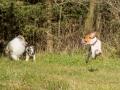 Hundemaedchen_Maggy_Gaia_Hundefreunde_Wanderung_Forum_Theo_Brooke_Smilla_Kito_Ulrichstein_Wandern_Spaziergang (60)