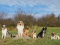 Hundemaedchen_Maggy_Gaia_Hundefreunde_Wanderung_Forum_Theo_Brooke_Smilla_Kito_Ulrichstein_Wandern_Spaziergang (78)