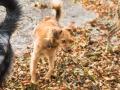 Hundemaedchen_Maggy_Gaia_Hundefreunde_Wanderung_Forum_Theo_Brooke_Smilla_Kito_Ulrichstein_Wandern_Spaziergang (94)