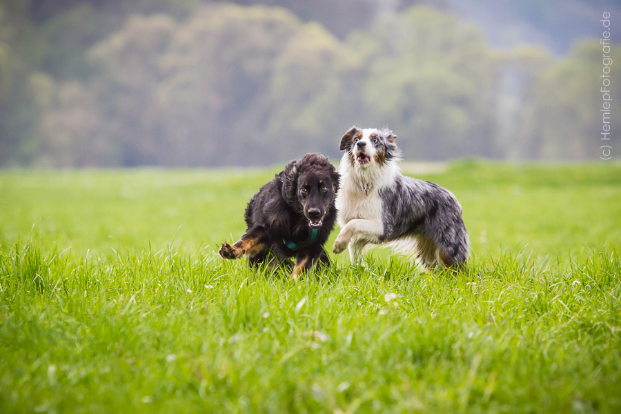 Partnervermittlung hunde