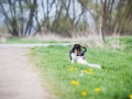 Hundefreunde_Marburg_Welpen_Baby_Junghunde_Treffen_Jung_Hunde_Langhaarcollie_Australian_Shepherd_Mini_American_Puppy_Baby_HemlepFotografie_Fotografin_Hemlep (1)