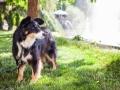 Tierfotografie_Hundefotografie_Marburg_Wetzlar_Giessen_Fotografin_Christine_Hemlep_Hund_Border_Collie_Mischling_tricolor_Maggy (1)