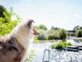 Tierfotografie_Hundefotografie_Marburg_Wetzlar_Giessen_Fotografin_Christine_Hemlep_Hund_Collie_Langhaarcollie_Blue_merle_Gaia (3)