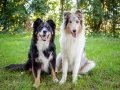 Tierfotografie_Hundefotografie_Marburg_Wetzlar_Giessen_Fotografin_Christine_Hemlep_Hunde_Langhaarcollie_Border_Collie_Gaia_Maggy (5)