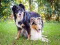 Tierfotografie_Hundefotografie_Marburg_Wetzlar_Giessen_Fotografin_Christine_Hemlep_Hunde_Langhaarcollie_Border_Collie_Gaia_Maggy (7)