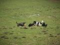 Hundewanderung_Wanderung_Hund_Marburg_Kirchhain_Spaziergang_Gassitreffen_Treffen_Hundetreffen_Hundeschule_Lahntal (10)