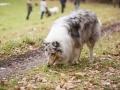 Hundewanderung_Wanderung_Hund_Marburg_Kirchhain_Spaziergang_Gassitreffen_Treffen_Hundetreffen_Hundeschule_Lahntal (13)