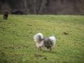 Hundewanderung_Wanderung_Hund_Marburg_Kirchhain_Spaziergang_Gassitreffen_Treffen_Hundetreffen_Hundeschule_Lahntal (14)