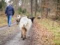 Hundewanderung_Wanderung_Hund_Marburg_Kirchhain_Spaziergang_Gassitreffen_Treffen_Hundetreffen_Hundeschule_Lahntal (15)
