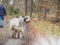 Hundewanderung_Wanderung_Hund_Marburg_Kirchhain_Spaziergang_Gassitreffen_Treffen_Hundetreffen_Hundeschule_Lahntal (16)