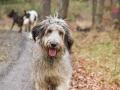 Hundewanderung_Wanderung_Hund_Marburg_Kirchhain_Spaziergang_Gassitreffen_Treffen_Hundetreffen_Hundeschule_Lahntal (19)