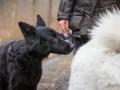 Hundewanderung_Wanderung_Hund_Marburg_Kirchhain_Spaziergang_Gassitreffen_Treffen_Hundetreffen_Hundeschule_Lahntal (23)