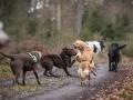 Hundewanderung_Wanderung_Hund_Marburg_Kirchhain_Spaziergang_Gassitreffen_Treffen_Hundetreffen_Hundeschule_Lahntal (31)