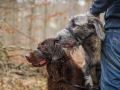 Hundewanderung_Wanderung_Hund_Marburg_Kirchhain_Spaziergang_Gassitreffen_Treffen_Hundetreffen_Hundeschule_Lahntal (34)