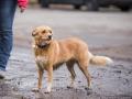 Hundewanderung_Wanderung_Hund_Marburg_Kirchhain_Spaziergang_Gassitreffen_Treffen_Hundetreffen_Hundeschule_Lahntal (47)