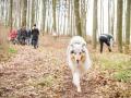 Hundewanderung_Wanderung_Hund_Marburg_Kirchhain_Spaziergang_Gassitreffen_Treffen_Hundetreffen_Hundeschule_Lahntal (50)