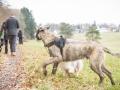 Hundewanderung_Wanderung_Hund_Marburg_Kirchhain_Spaziergang_Gassitreffen_Treffen_Hundetreffen_Hundeschule_Lahntal (53)