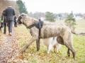 Hundewanderung_Wanderung_Hund_Marburg_Kirchhain_Spaziergang_Gassitreffen_Treffen_Hundetreffen_Hundeschule_Lahntal (54)