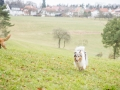 Hundewanderung_Wanderung_Hund_Marburg_Kirchhain_Spaziergang_Gassitreffen_Treffen_Hundetreffen_Hundeschule_Lahntal (58)
