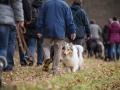 Hundewanderung_Wanderung_Hund_Marburg_Kirchhain_Spaziergang_Gassitreffen_Treffen_Hundetreffen_Hundeschule_Lahntal (68)