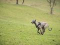 Hundewanderung_Wanderung_Hund_Marburg_Kirchhain_Spaziergang_Gassitreffen_Treffen_Hundetreffen_Hundeschule_Lahntal (80)