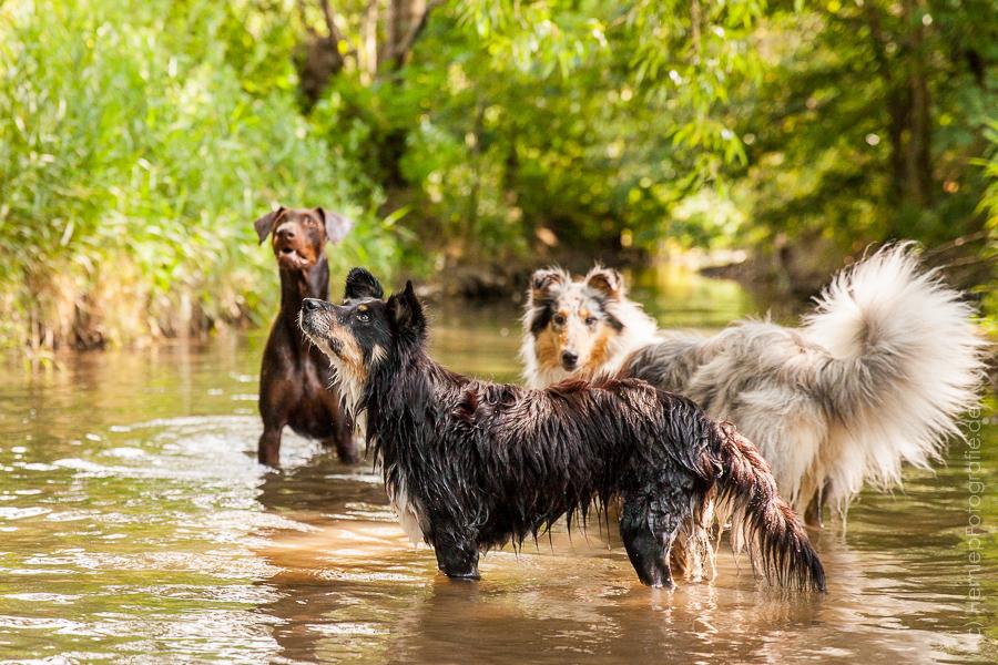 Wasserplanschereien bei Spencer