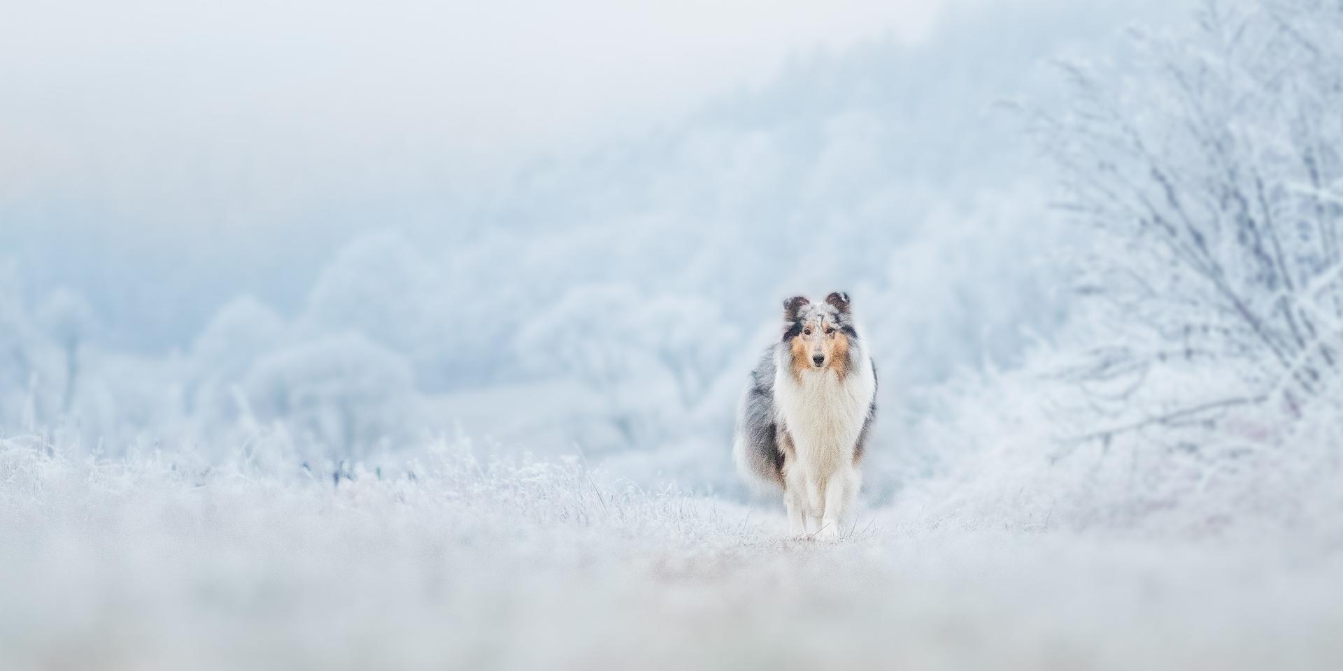 Die Hundemädchen