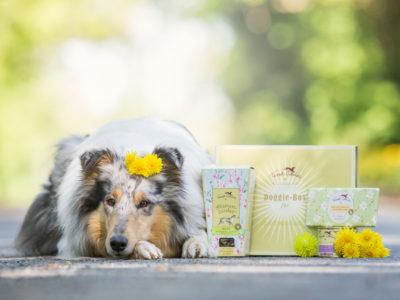 Wir haben getestet… | Doggie Box von Terra Canis