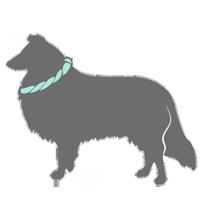 Hundeleinen, Halsbänder & Co.