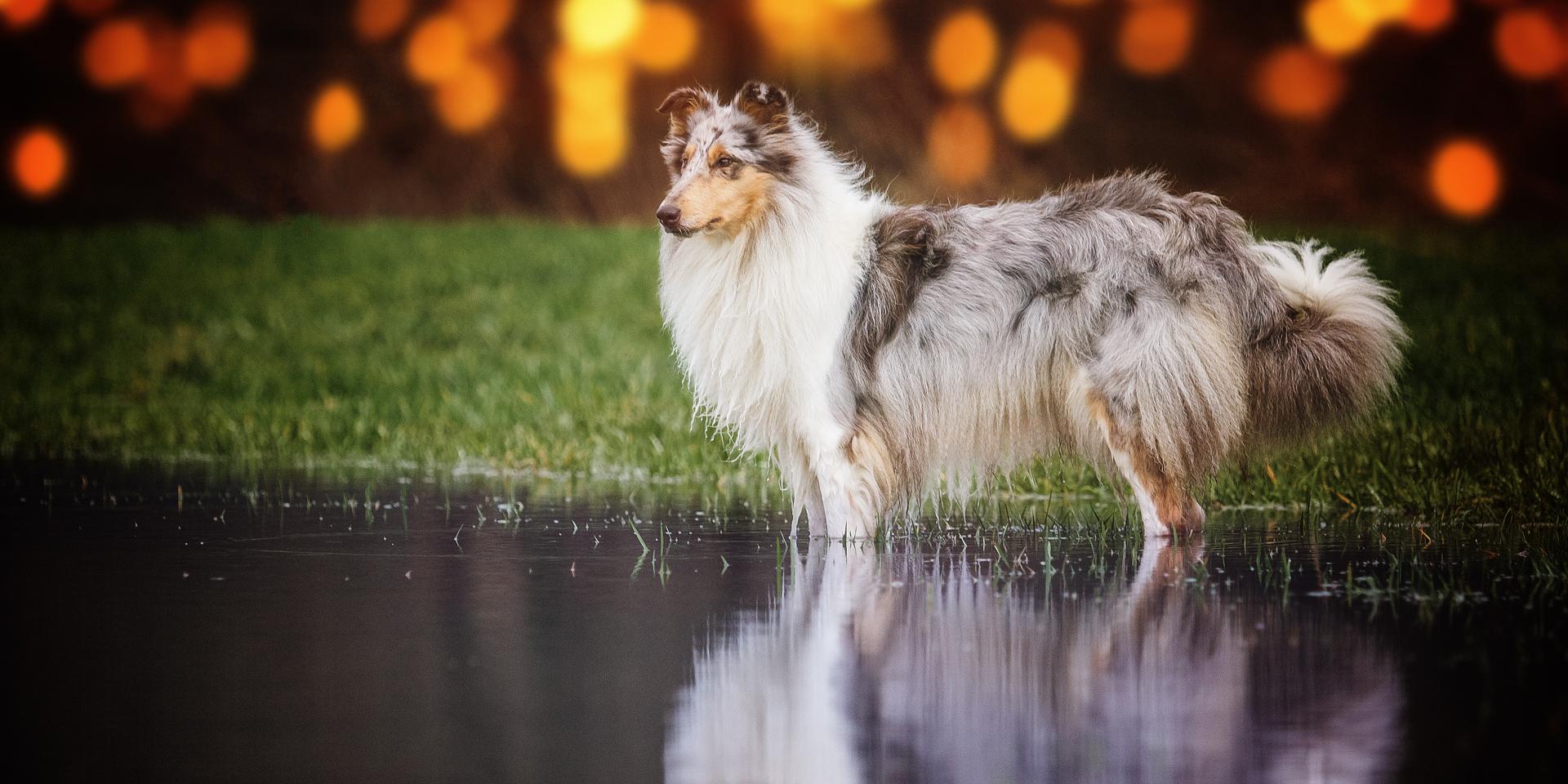 Hundemädchen  Gaia