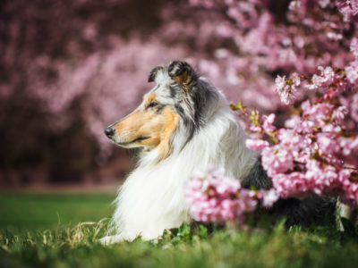 Unser April | Es wird Frühling