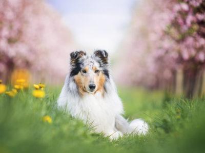 Unser Mai | Der Wonnemonat